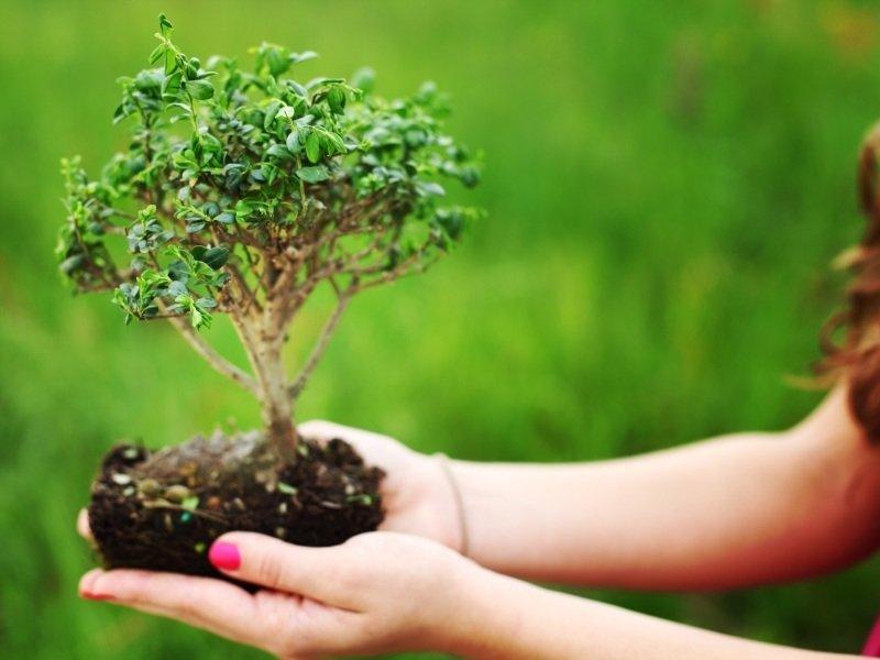 Bomen voor kleinere tuinen tuintips tuincentrum meijers - Hoe een boom te verlichten ...